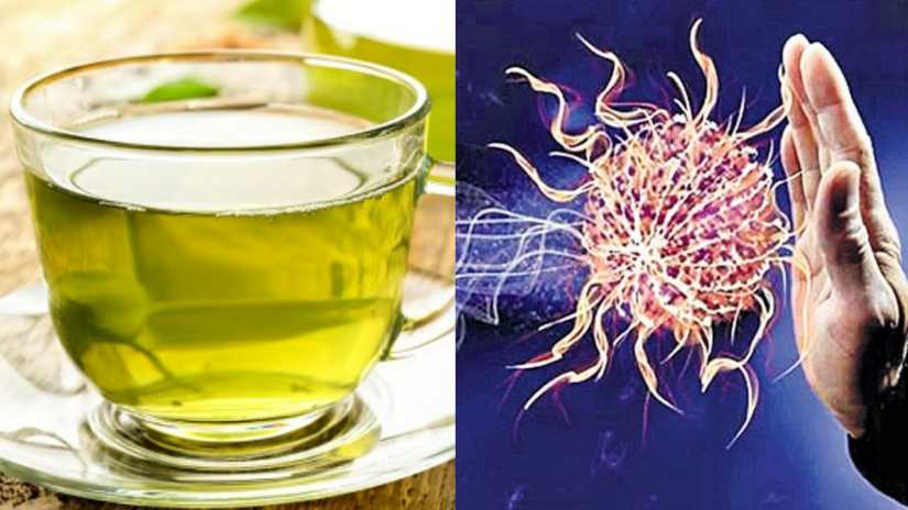 Green Tea for immune system