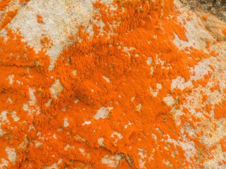 caroteni-polvere-xcyp1