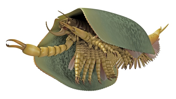 Sea Creature from the Cambrian Period Discovered at the University of Toronto