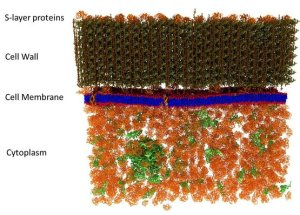 A picture of a cell membrane was made at the smallest scale so far, the details are amazing