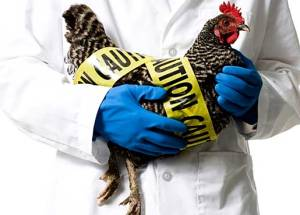First Cases Of Avian Flu Were Found In The Philippines