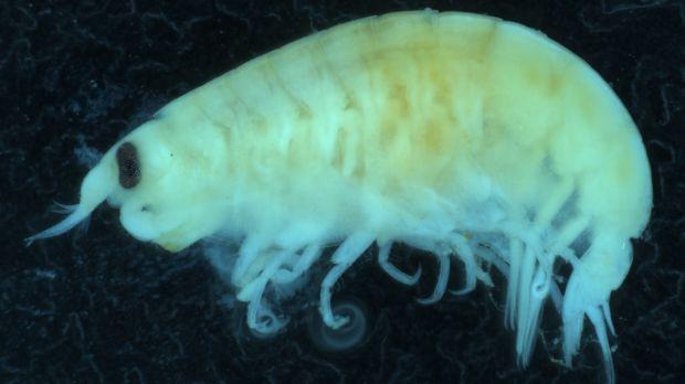 Sea Fleas Might be the Culprits Behind Bloody Bites on Teen's Leg