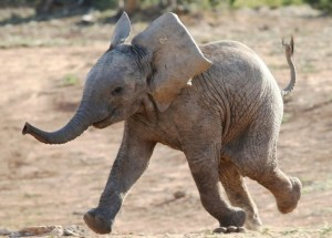 Baby Elephants Get Cozy in Woolly Jumpers