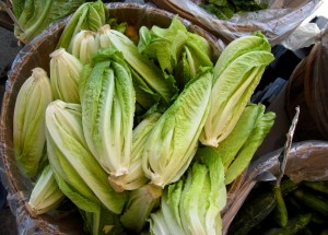 Romain Lettuce Could Be Cause of E.Coli Infection Outbreak in the US and Canada