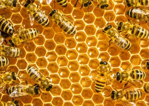 In Iowa, Two Boys Have Been Arrested For Killing Honeybees