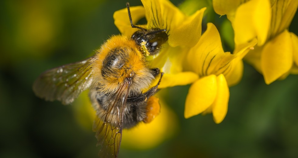 Honeybees Hives Don't Help The Environment