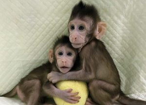 Chinese Created The First Monkey Clones