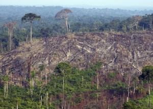 The Amazon Rainforest Is Heading Towards A Critical Point