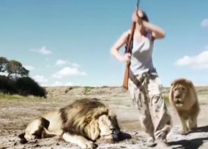 Lions Killed A Poacher In South Africa