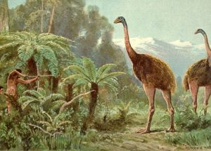 Scientists May Revive An Extinct Bird As They've Reconstructed Its Genome
