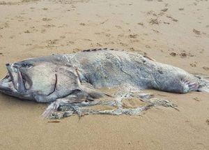 A Sea Monster Has Appeared On A Beach In Australia And Scientists Know Nothing About Its Origins