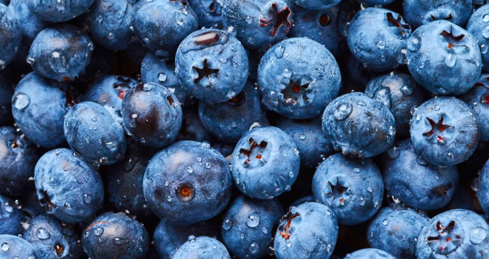 The Healthiest Berries on the Planet can be Found in B.C. but Their Taste is Not The Best