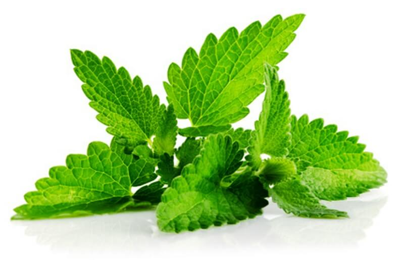 Mint Cream Health Benefits – Great For Digestion, Relaxation, And Even For A Fresh Breath