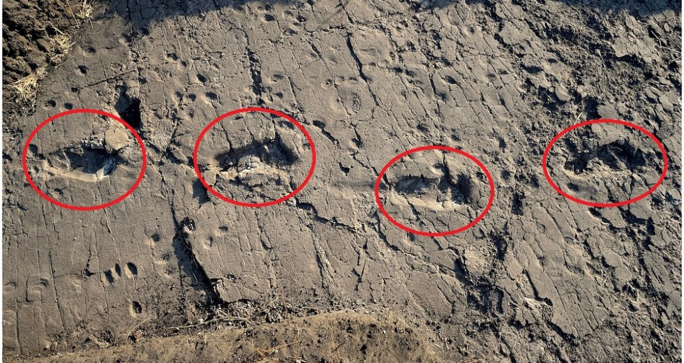 Oldest Human Footprint to Date had been Uncovered