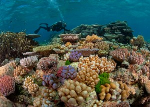 Urgent Measures are Needed to Prevent the Extinction of Coral Reefs