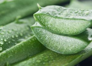Aloe Vera Topical Preparations Are Ideal For Diaper Rash Treatment In Babies