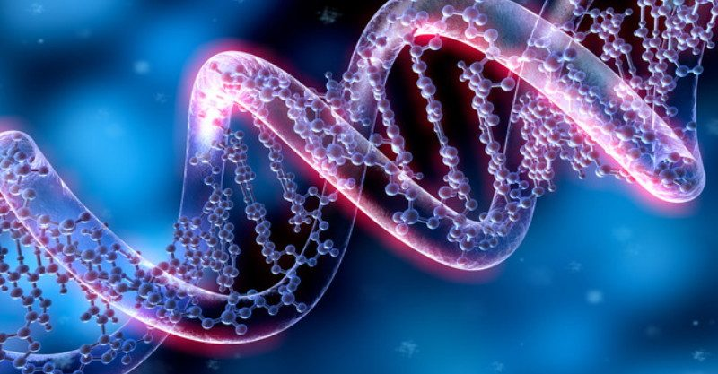 The Junk DNA Has A Crucial Role In The Organism, A New Study Revealed