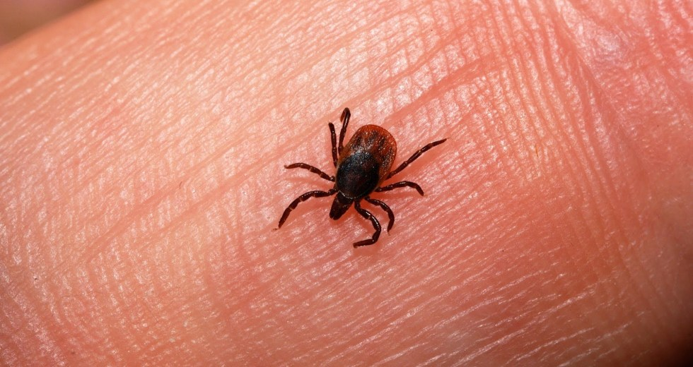 California Deals With Ticks Carrying the Lyme Disease