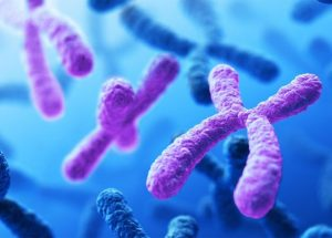 Genetic Diversity Collapse In Y-Chromosomes In Ancient Humans Linked To Social Changes And Wars