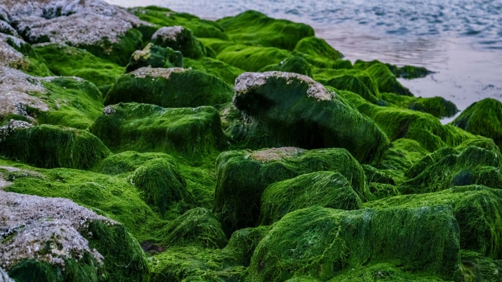 New Form of Photosynthesis Could Be Used To Grow Plants On Other Planets