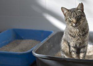 Cat's Poop Brings a Parasite Likely to Develop Entrepreneurial Behavior