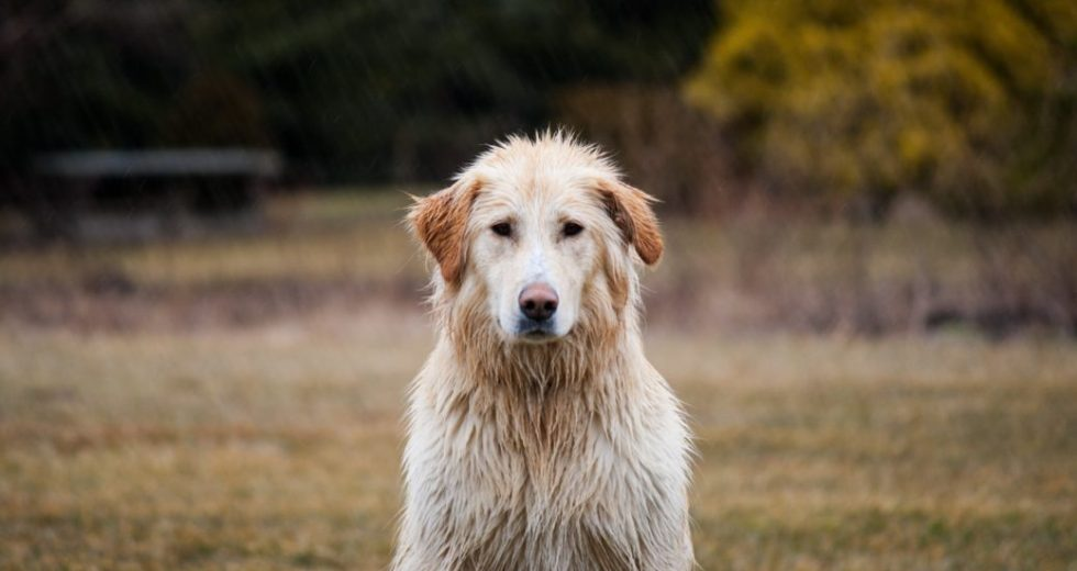 How to Protect Yourself and your Pets Against the Lyme Disease