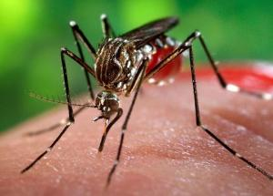 Mosquitoes Carrying The West Nile Virus Could Be Deadly (WATCH OUT)