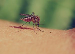 Nile Virus Concerns In Saskatchewan, According To The Local health Authority