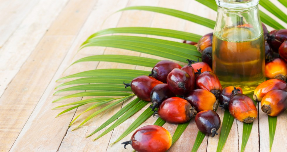 "Palm Oil Linked To High ""Bad Cholesterol"" Levels And Cancer, According To Latest Studies"