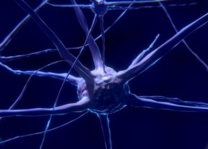New Type Of Neurons Found By Scientists In Humans