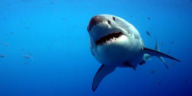 A Shark Attacked a 61-year-old man, But it Got Punched Instead