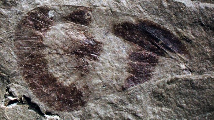 Ancient Insects Found in China Revealed That Bugs Proliferated Around 237 Million Years Ago