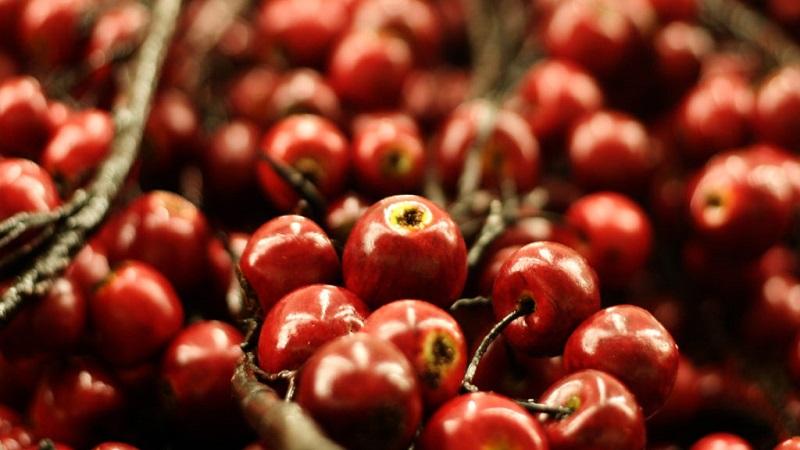 Exotic Fruit Camu-Camu Might Help Fight Obesity
