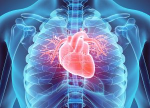 Cardiovascular Diseases Are The Leading Cause of Death Around The World, the WHO Warns