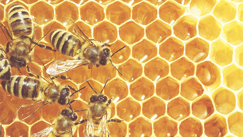Glyphosate-Based Common Herbicide Linked To Bee Deaths, According to A New Study