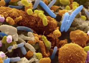 Human Gut Bacteria Present Over 6,000 Antibiotic-Resistant Genes