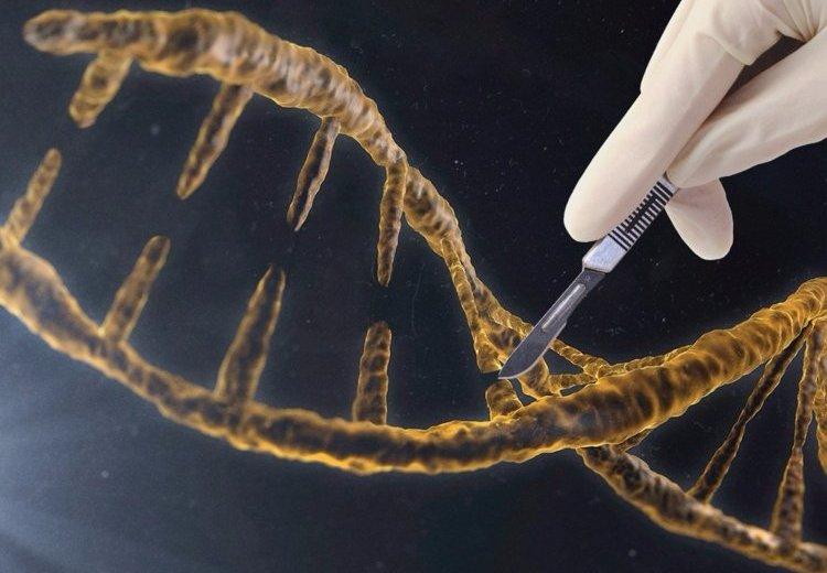 World Health Organization To Study Health Impact Of Gene Editing