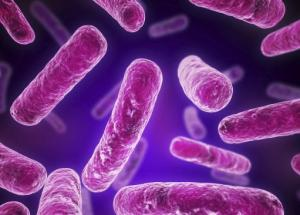 What Is Legionella Bacteria and Why Is It Dangerous?