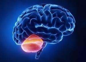 Cerebellum Is Influencing Addictive and Social Behavior