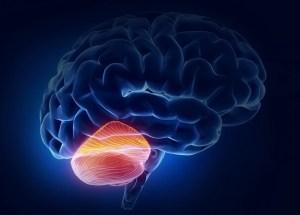 Alzheimer's Disease Is Not Affecting The Cerebellum