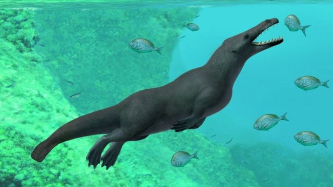 Ancient Whales With Four Legs Are The Ancestors Of Modern Cetaceans