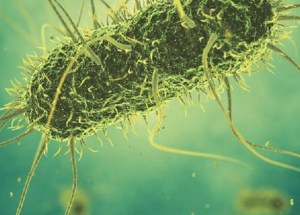 Researchers Created New Bacteria Strain From An Artificial Genome