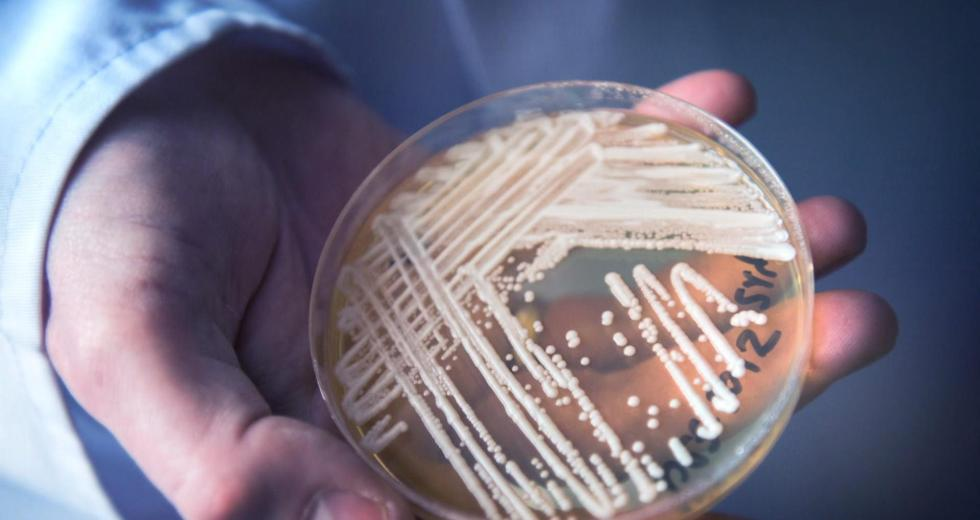 Deadly Drug-Resistant Pathogen Emerged In Canada