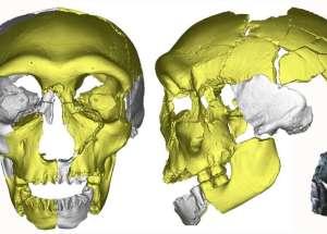 Pleistocene Ancient Human Skull Shed More Light On Human Evolution