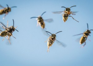 Scientists Observed Logical Thinking In Wasps
