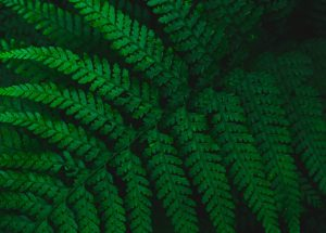 Plants Do Not Possess Conscious Awareness, A New Study Concluded