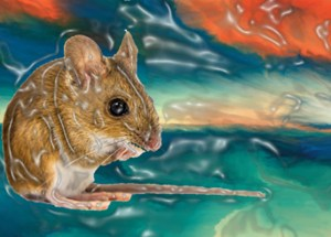 Scientists Produced Hallucinations In Mice Using Light