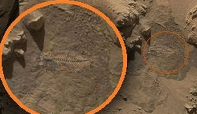 NASA's Curiosity rover captures photo of a fish fossil on Mars