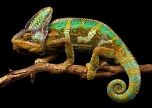 """Chameleon"" Smart Skin Invented By Scientists Switches Colors When Exposed To The Sun"