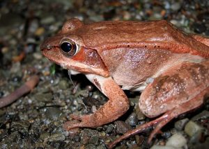 The Clever Method used by a Toad to Escape Danger